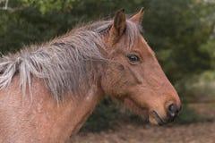 一个新的森林小马 免版税库存图片