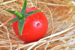 一个新鲜的红色蕃茄 库存图片