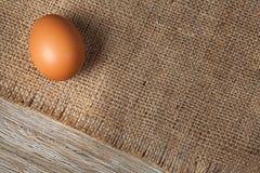 一个新鲜的鸡鸡蛋 库存照片