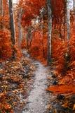 一个方式在森林里 免版税库存图片
