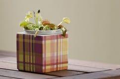 一个方形的罐的维纳斯捕蝇器植物 库存图片