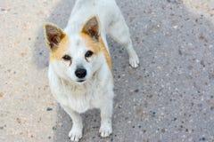 一个无家可归的狗身分的感兴趣的神色在路的 免版税库存照片
