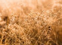一个早晨之前报道的日出光的野生植物降露 免版税库存照片