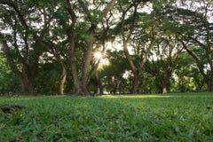 一个早晨好在公园 免版税库存图片