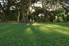 一个早晨好在公园 免版税库存照片