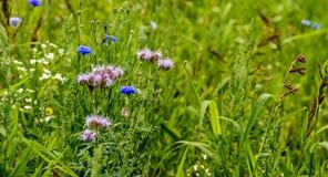 一个昆虫友好的领域边缘的特写镜头与野生植物的 库存图片