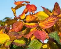 从一个明亮的上颚的秋天油漆 免版税库存照片