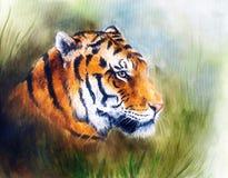 一个明亮的强大老虎头的绘画在一个软的被定调子的摘要的 库存照片