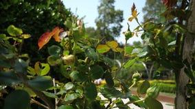 一个晴朗的夏天公园宏指令的绿色植物,桔子叶子由风行动了 影视素材