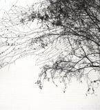 一个有花边的都市树剪影 库存照片