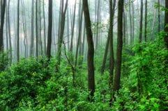 一个有薄雾的早晨在一个美丽如画的森林太阳发出光线的森林 库存图片
