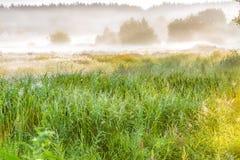 一个有薄雾的早晨在阳光下在村庄的郊区 免版税库存照片
