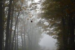 一个有薄雾的秋天早晨 免版税库存图片