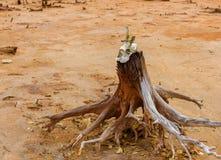 一个有角的动物的头骨以一棵死的老树为背景的 库存图片