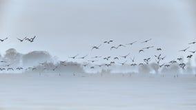 一个有雾的早晨 免版税库存图片