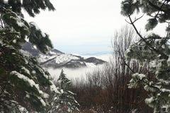 一个有雾的谷的阴暗冬天风景 免版税图库摄影