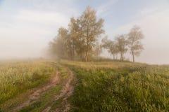 一个有雾的Mountain湖的春天海岸线日出的 免版税库存照片