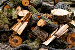 一个木制框架在湿草的小山说谎 树用青苔盖 库存图片