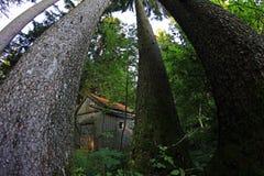 一个木小屋的宽射击在森林里 免版税库存图片
