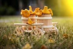 一个木推车用新鲜的蘑菇 特写镜头 库存照片