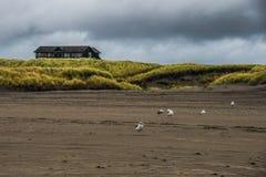 一个木海滨别墅坐在一个绿色象草的领域的小小山在一个风雨如磐的秋天晚上在长滩华盛顿 免版税库存照片