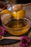 从一个木蜂蜜浸染工的蜂蜜水滴在瓶子 免版税库存照片