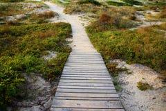 一个木走道向海 免版税库存照片