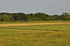 一个村庄领域的田园诗风景在旱季的 免版税库存照片