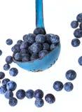 一个杓子用蓝莓 库存图片
