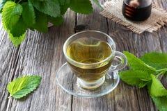 一个杯子与新鲜的蜜蜂花枝杈的蜜蜂花茶 免版税库存照片