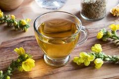 一个杯子与mullein的mullein茶在背景中开花 免版税库存图片