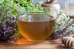 一个杯子爬行的百里香胸腺serpyllum茶 库存照片