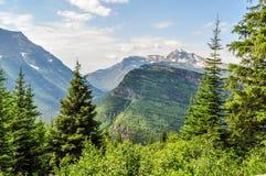 一个枞松森林构筑冰川国家公园积雪覆盖的山  库存图片