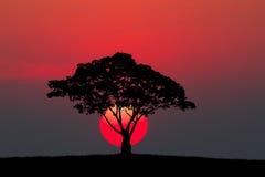 一个树和草甸的剪影有日落的 免版税库存图片