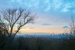 一个树城市 库存照片