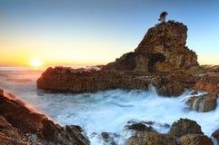 一个树岩石 免版税图库摄影