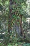 一个树干本质上 库存照片