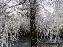 一个树枝的弗罗斯特在冬天 免版税库存照片
