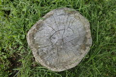 一个树桩在有草的森林 库存照片