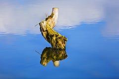一个树桩在有copyspace的一个湖在wat的天空的反射 库存图片