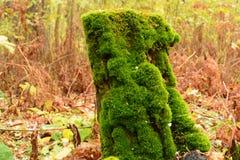 一个树桩在青苔下的森林里 图库摄影