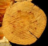 一个树桩的顶视图在ntural背景的 图库摄影
