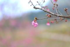 一个桃红色开花分支 库存图片