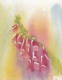 一个桃红色毛地黄属植物的手画水彩 图库摄影