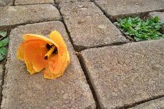 一个桔子花 库存图片