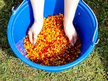 一个桶煮沸的色的玉米 库存图片