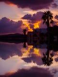 一个棕榈剪影的反射在多云天空下 库存图片