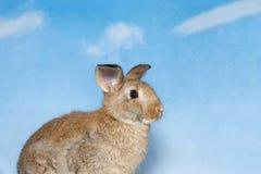一个棕色兔宝宝的外形有蓝天背景 免版税库存图片