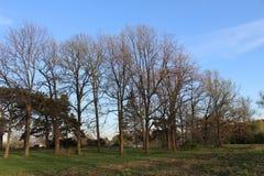 一个森林在冬天 库存图片