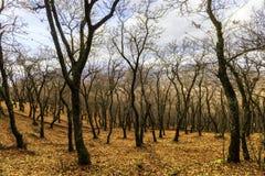 一个森林在秋天 图库摄影